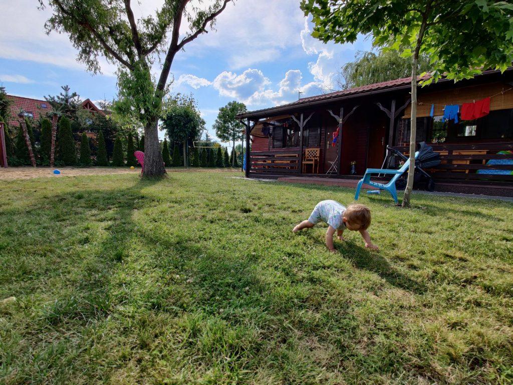 bobas na trawie